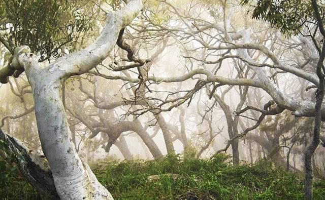 Neblina em Palm Beach.